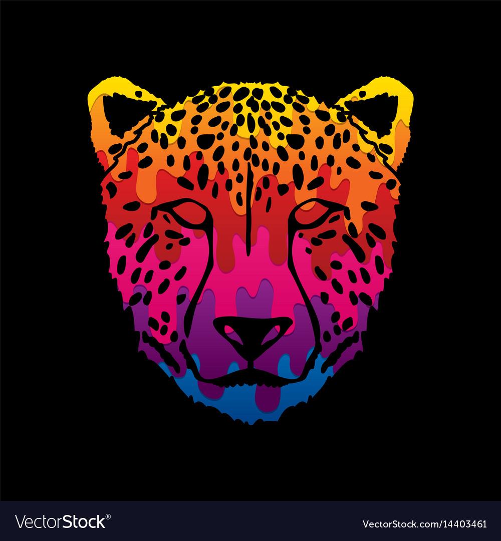 Cheetah face tiger head panthera front view face