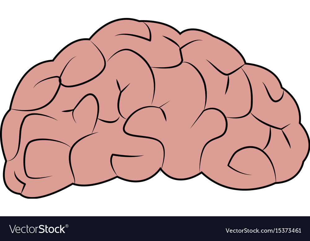 Drawing Brain Human Organ Part Anatomy Royalty Free Vector
