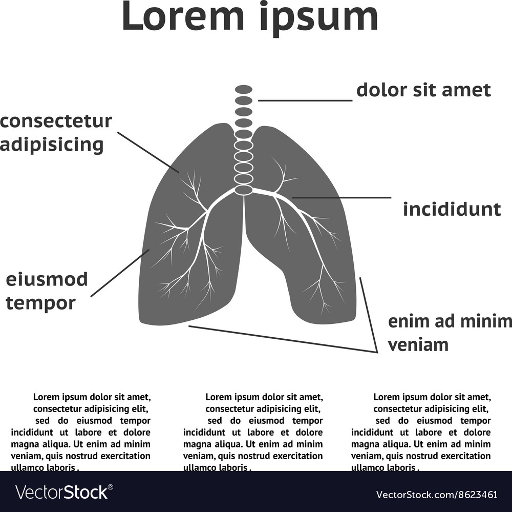 Lung Structure Infographic Royalty Free Vector Image