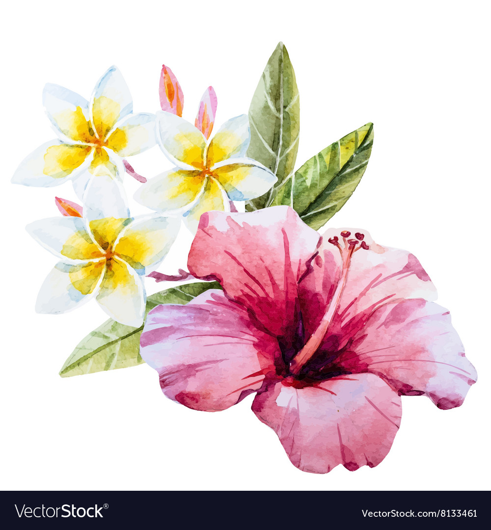 Watercolor Hibiscus Flower Royalty Free Vector Image