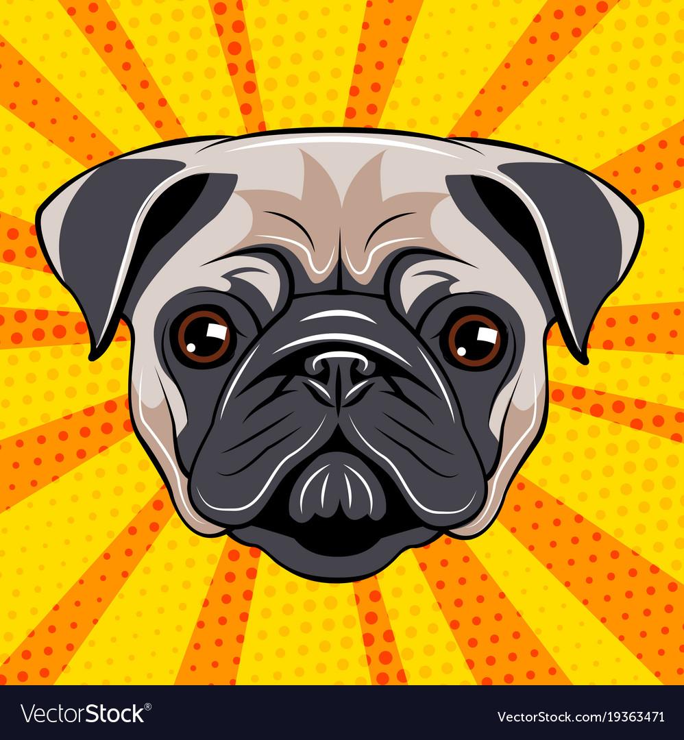 Pug dog face dog portait