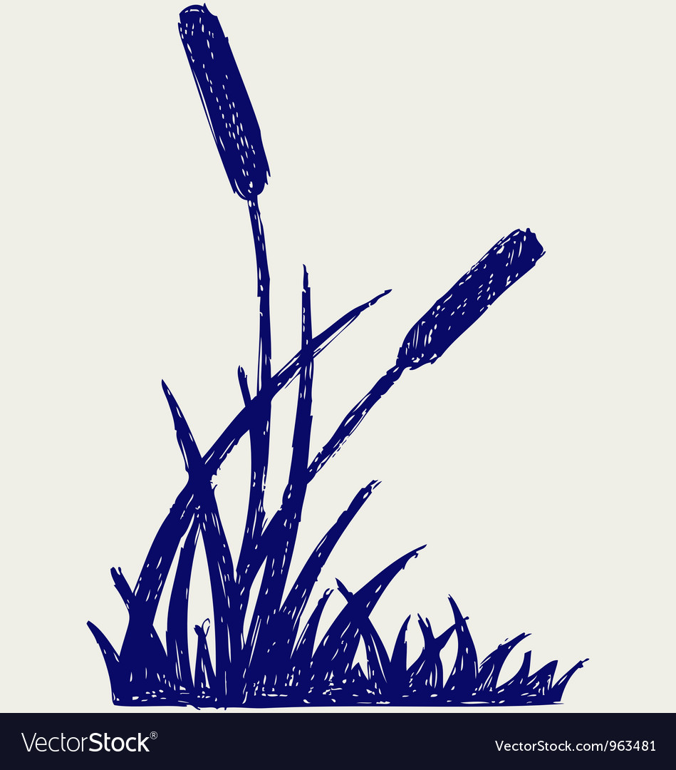 Swamp sketch vector image