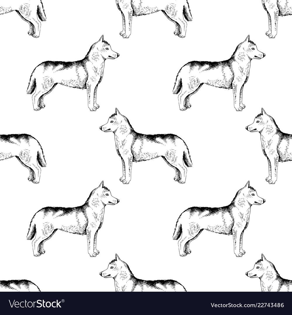 Seamless pattern with hand drawn siberian huskies