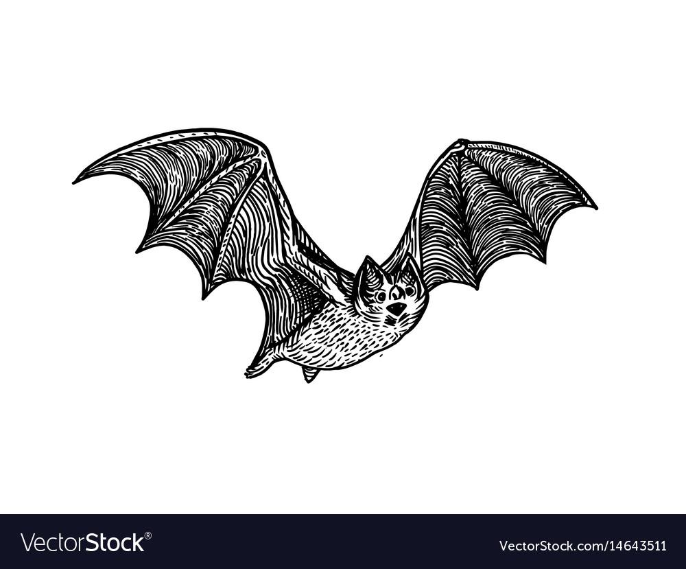 Bat engraving style vector image