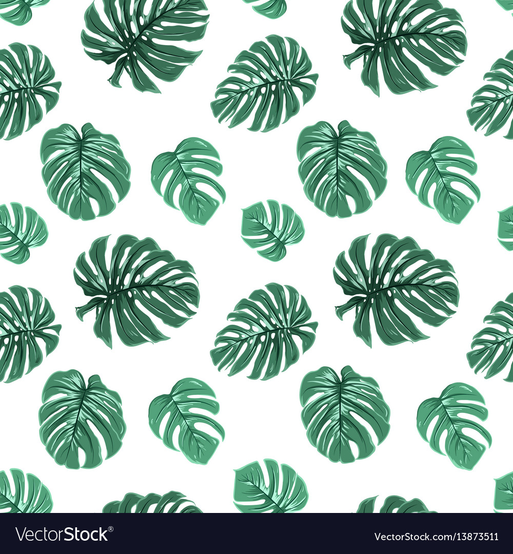 Exotic tropical green monstera leaves pattern
