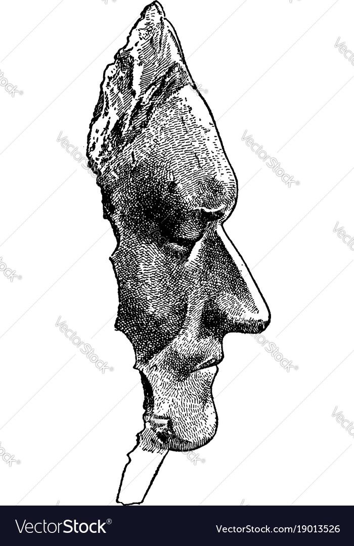 Death mask of sir isaac newton vintage vector image