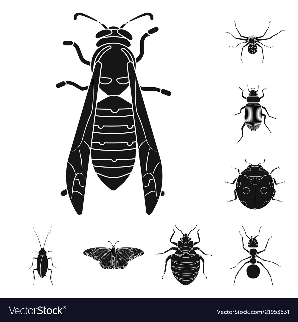 Isolated object of insect and fly symbol set of