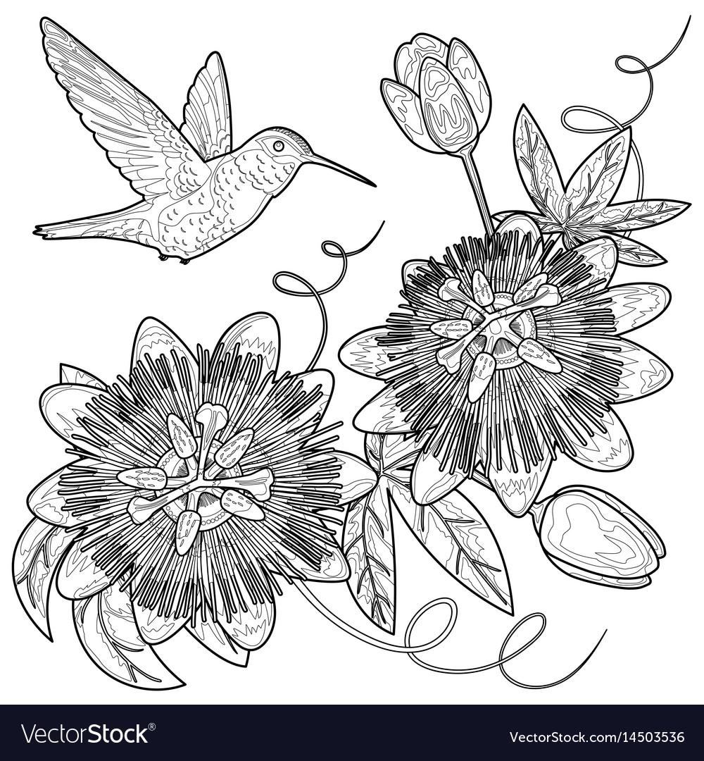 Hummingbird and passiflora coloring page
