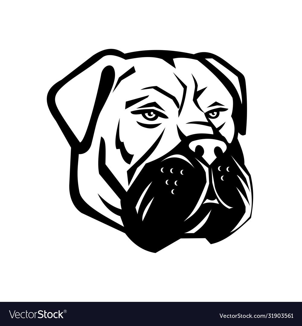Bullmastiff Dog Breed Information | 1080x1000