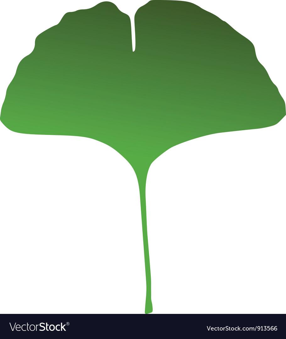 ginkgo leaf royalty free vector image vectorstock