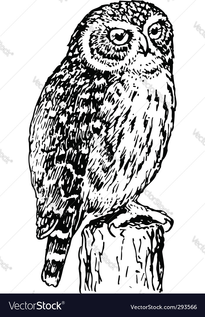 Horned owl vector image