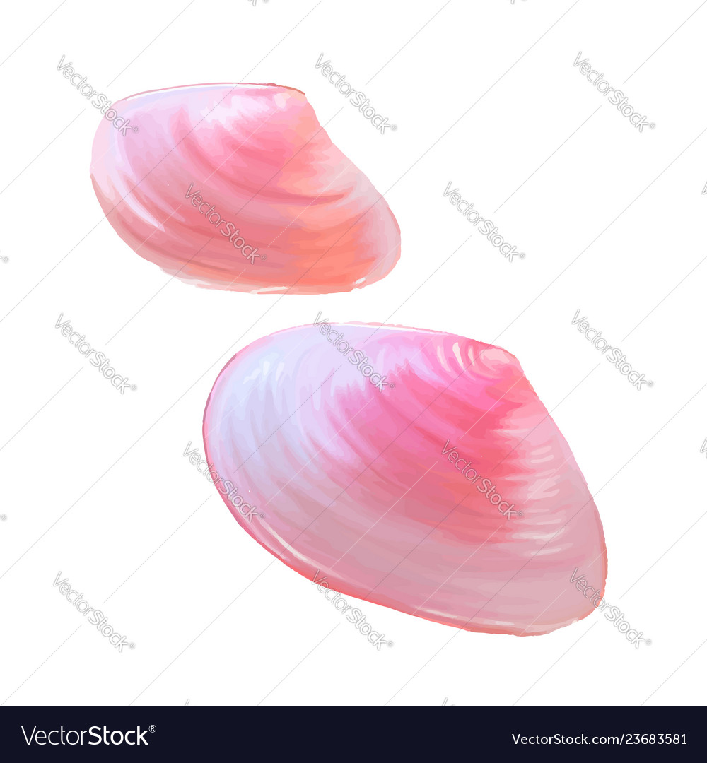 Pink seashells under the sea