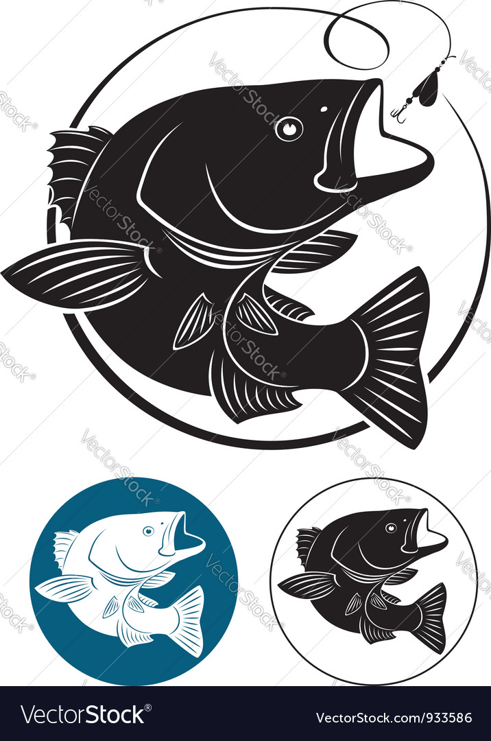Sriped Bass vector image