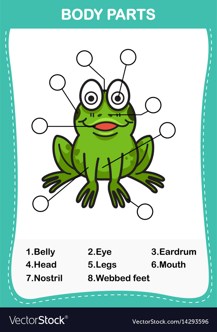 parts of a frog