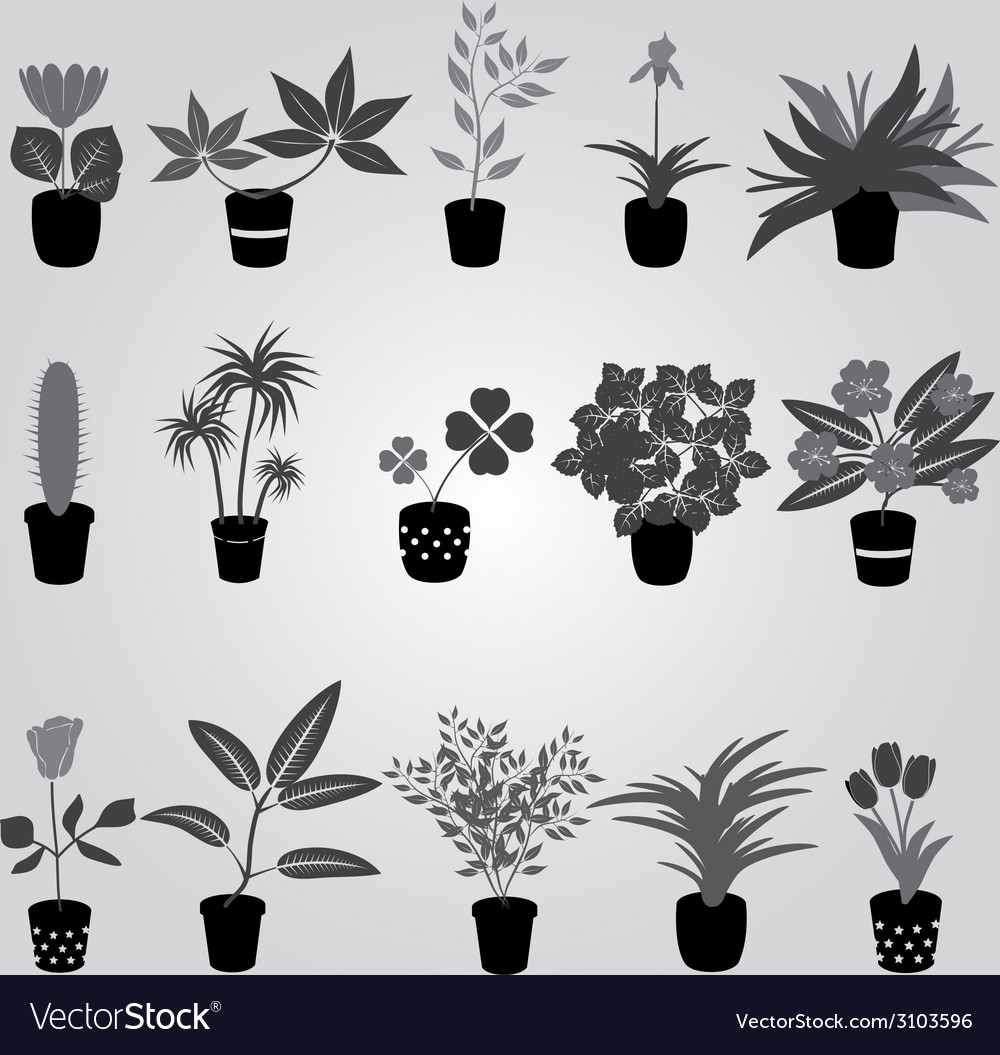 Home Houseplants And Flowers In Pot Grayscale Vector Image