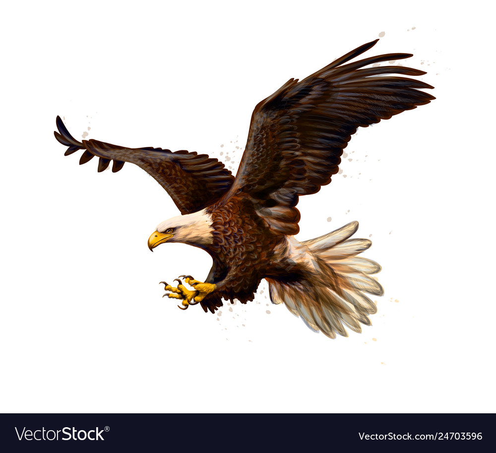 Portrait of a bald eagle from a splash