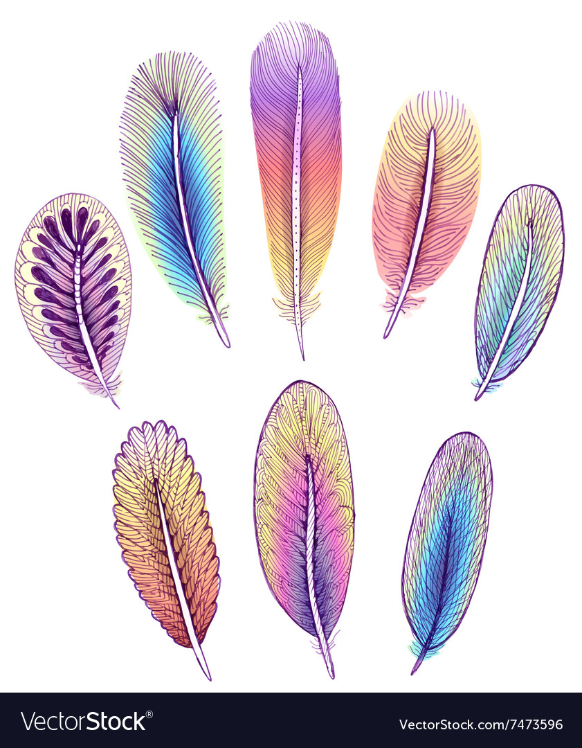 Set of isolated colorful feathers EPS10