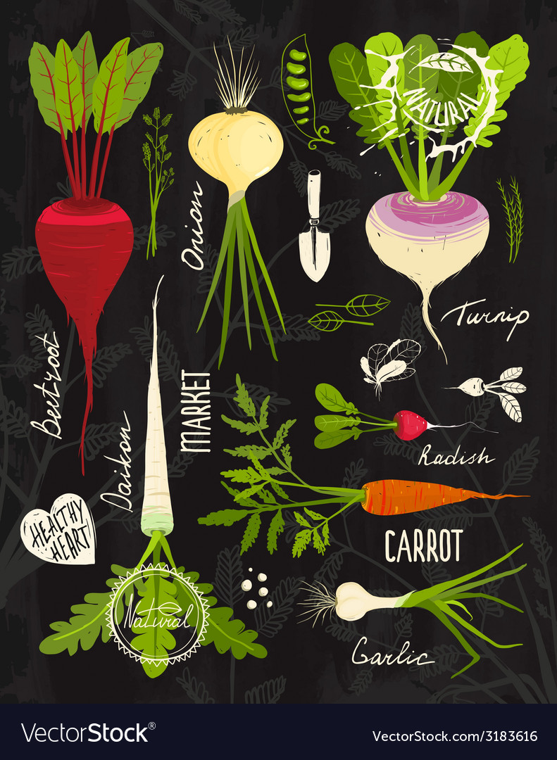 Root Vegetables With Leafy Tops Set For Design On Vector Image