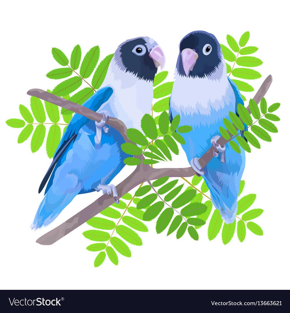 Pair of blue masked lovebirds vector image