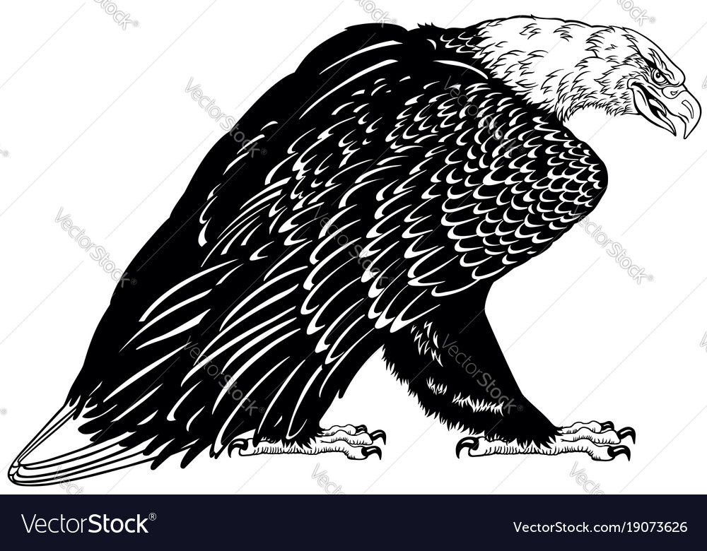 Bald eagle black and white