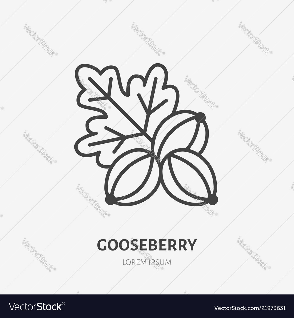 Gooseberry flat line icon forest berry sign