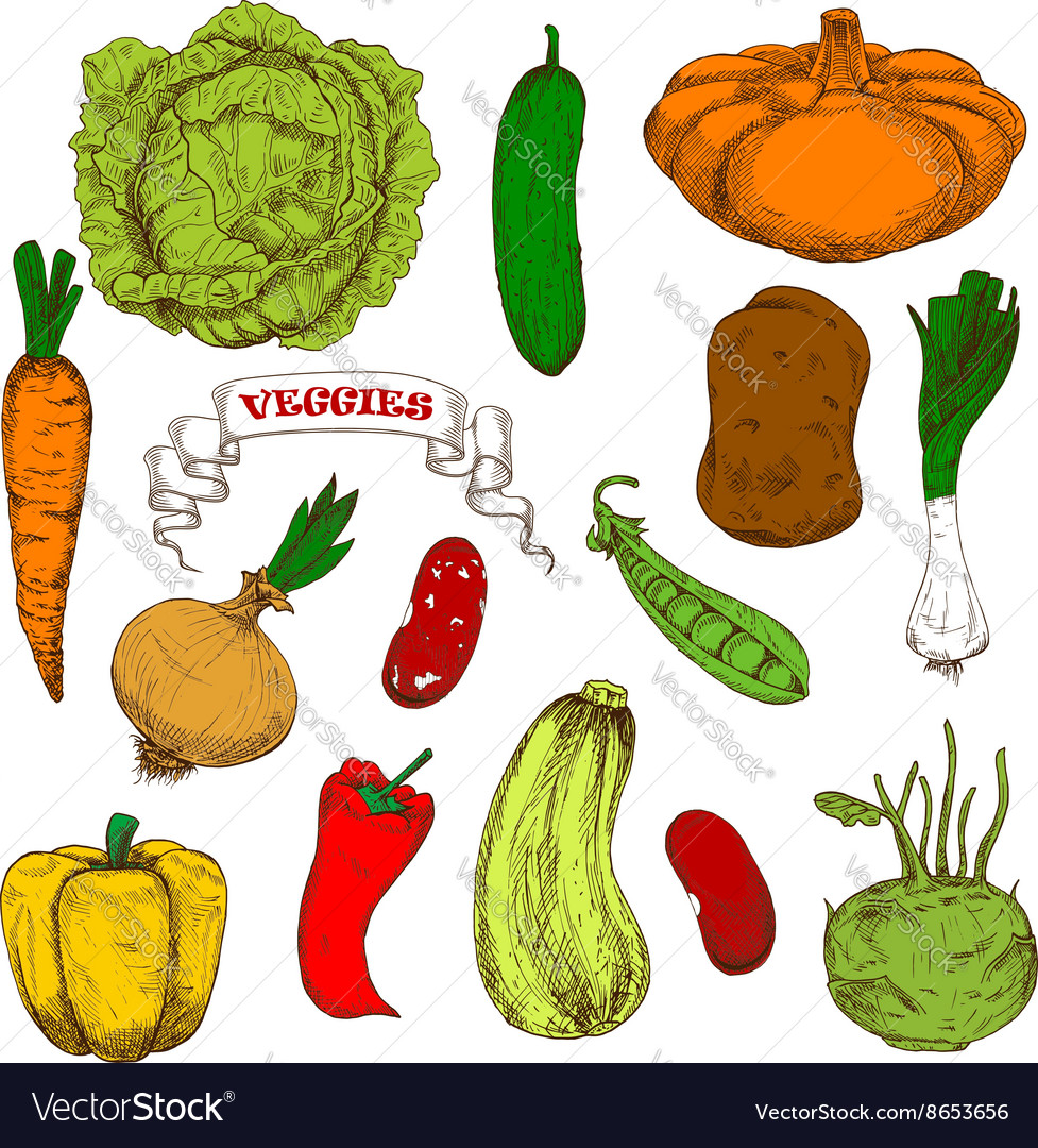 Engraving sketches of healthful organic vegetables