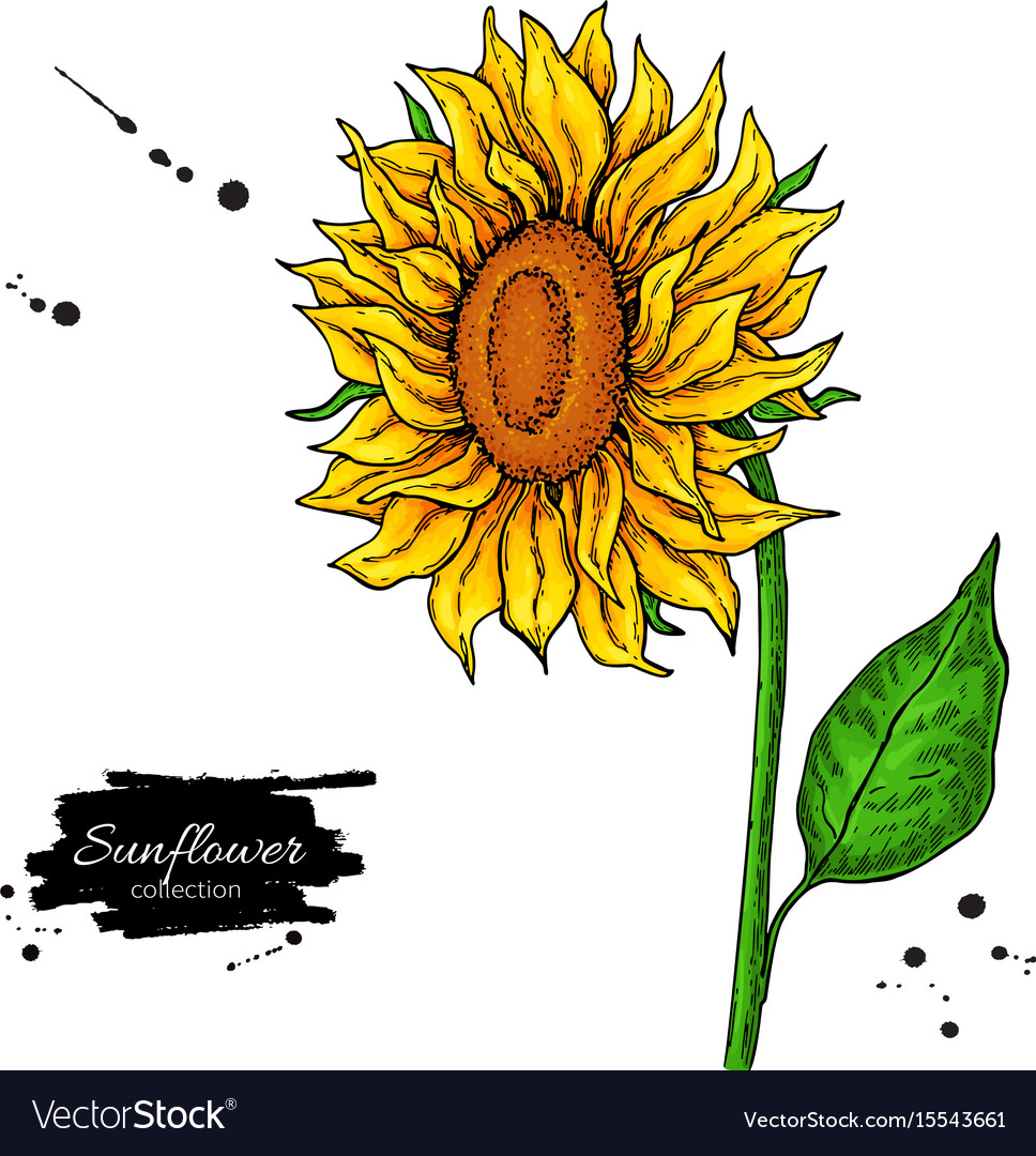 Sunflower Flower Drawing Hand Drawn Royalty Free Vector