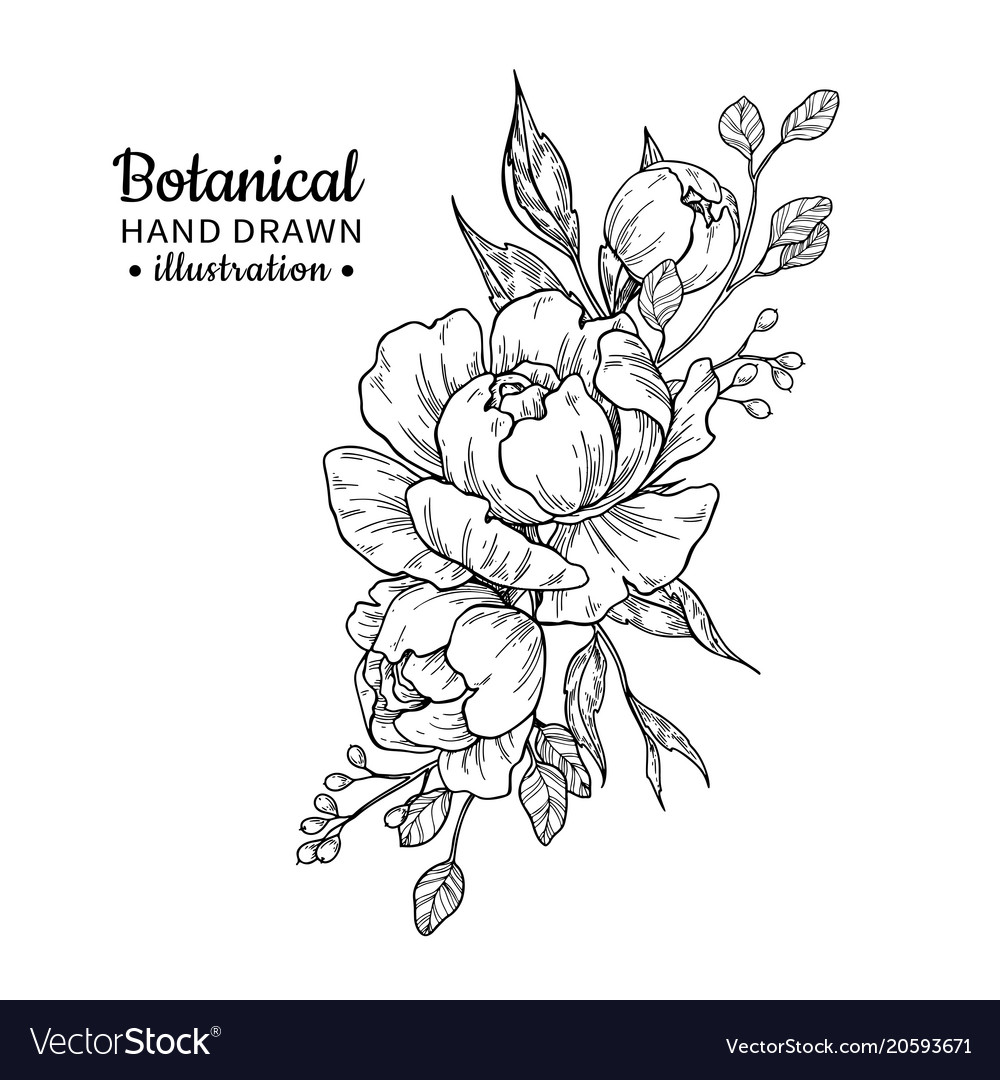 Vintage flower bouquet drawing peony royalty free vector vintage flower bouquet drawing peony vector image izmirmasajfo