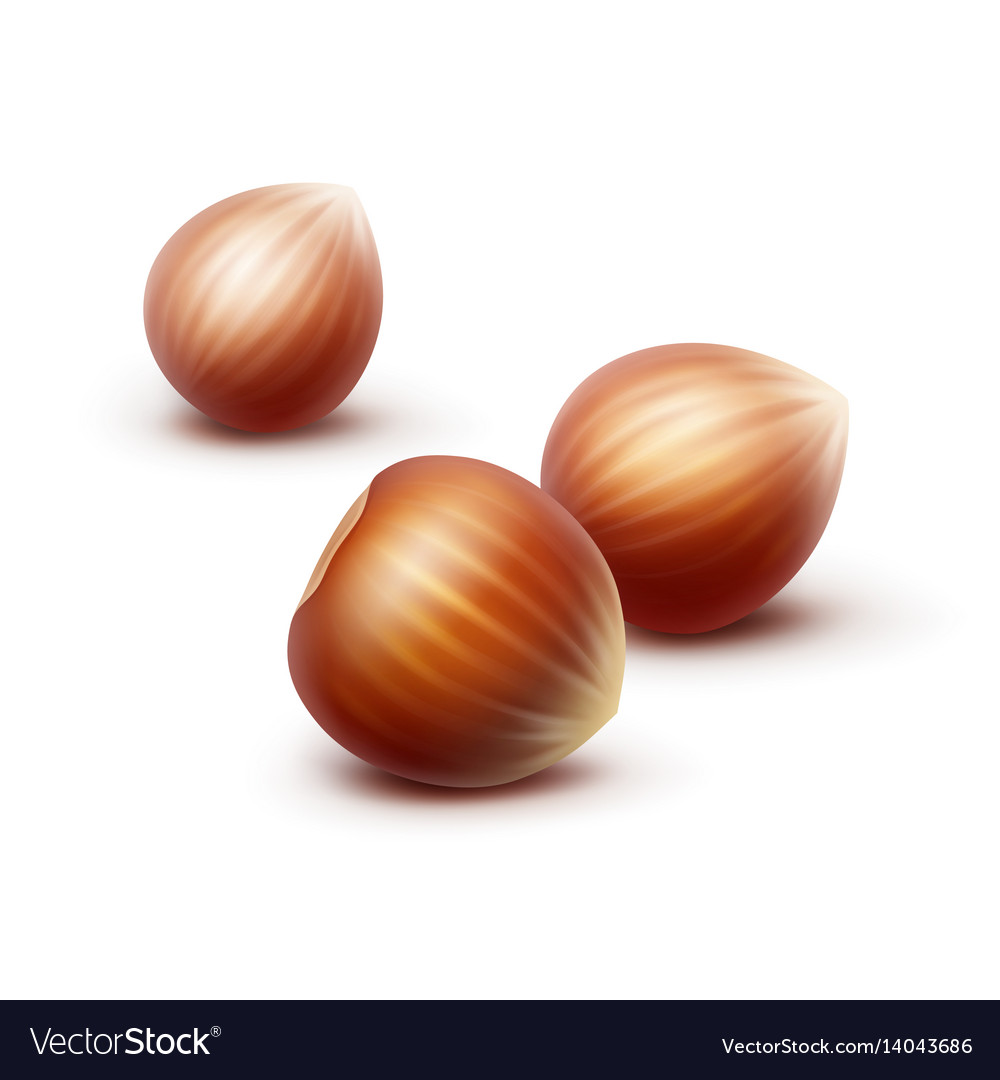 Full unpeeled realistic hazelnuts on background vector image