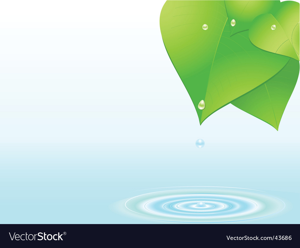 Water droplet and ripple vector image