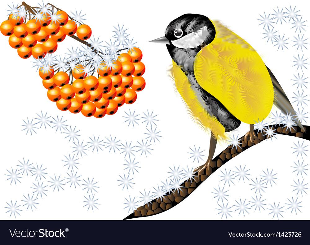 Bird and winter berries