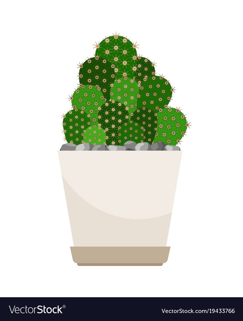 Cactus House Plant In White Flower Pot Royalty Free Vector