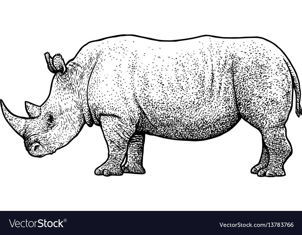 Rhinoceros drawing engraving ink vector image