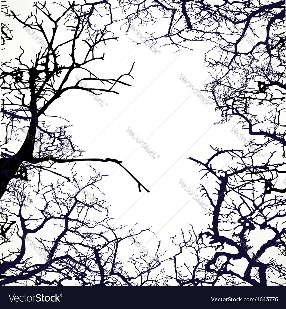 Frame from silhouettes of bare branches of trees vector image