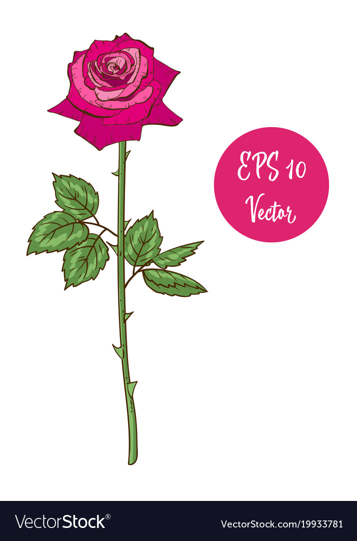 Single pink rose flower beautiful royalty free vector image single pink rose flower beautiful vector image mightylinksfo