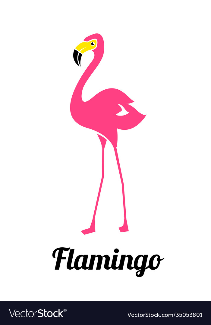 Pink flamingo on a white background flamingo