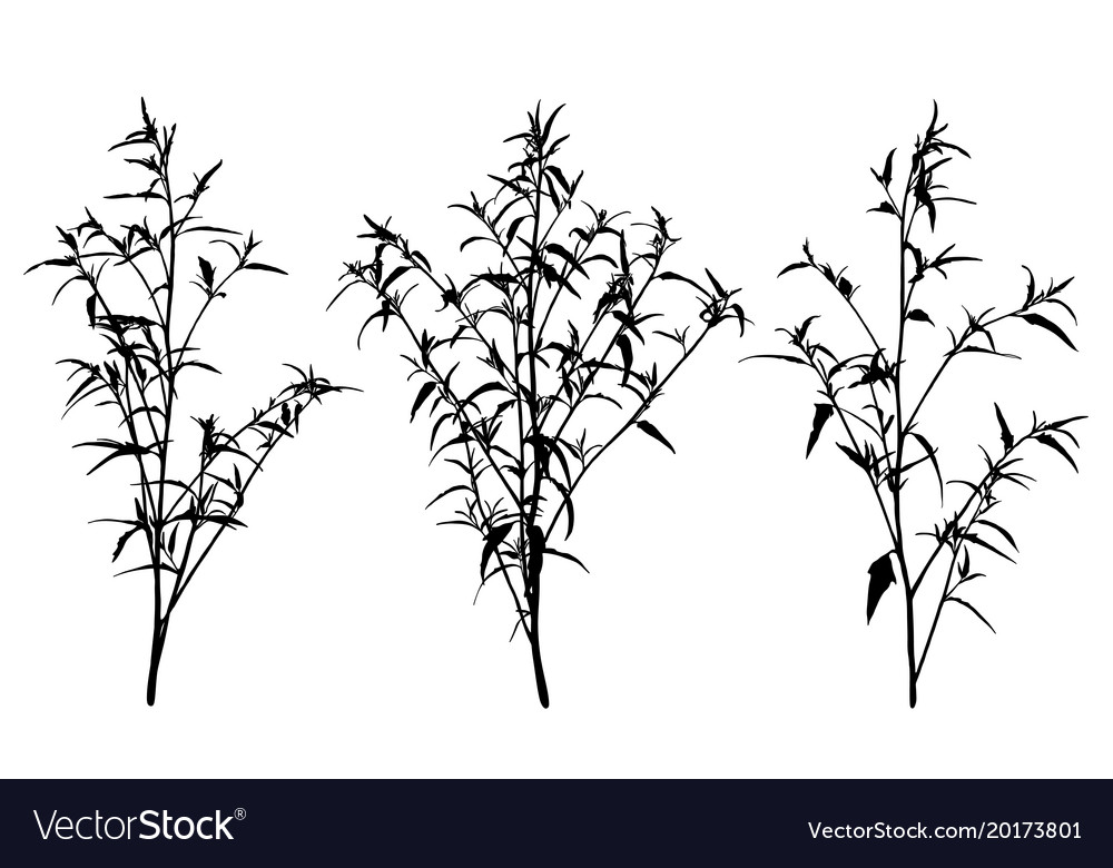 Set of wild herbs silhouettes