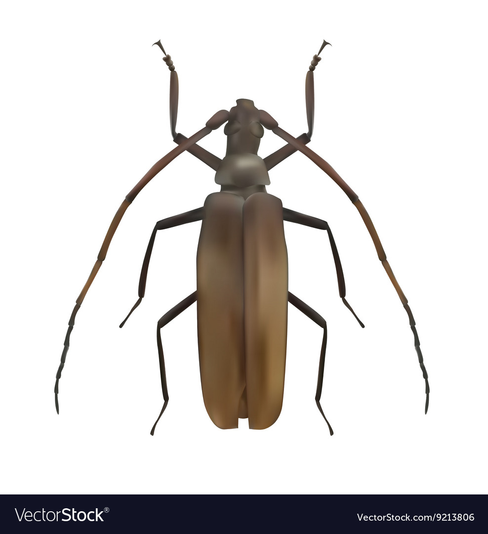 Large Brown Beetle Realistic