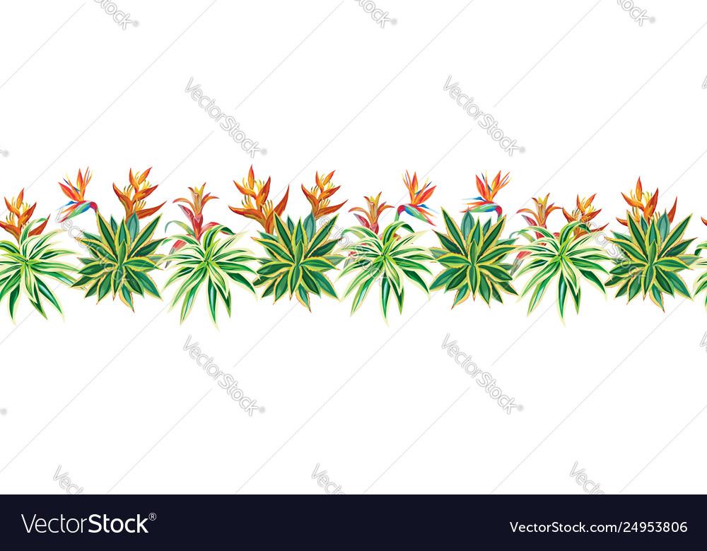Succulent cactus ribbon tropical plants flowers