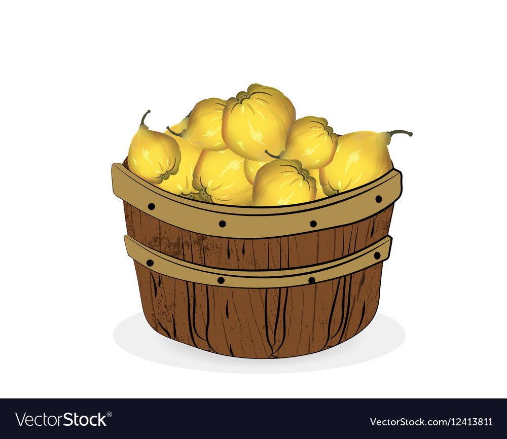 Quince fruits in a wooden basket vector image