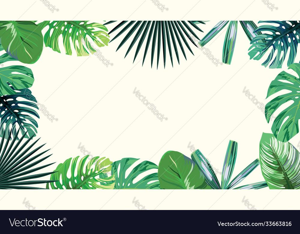 4k green tropical frame wallpaper white background