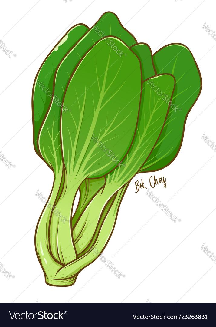 Bok Choy Green Vegetables Vector Image