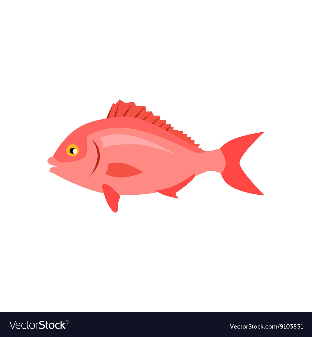 Sea Fish in Pink Color Isolated Royalty Free Vector Image