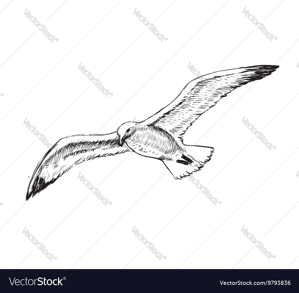 Flying Seagulls Hand Drawing