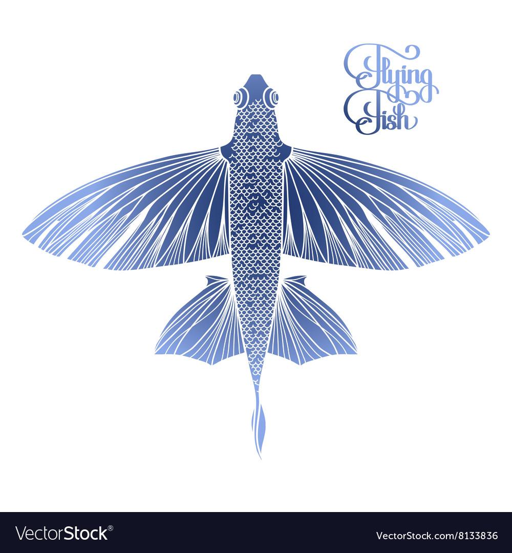 Graphic Flying Fish Royalty Free Vector Image Vectorstock