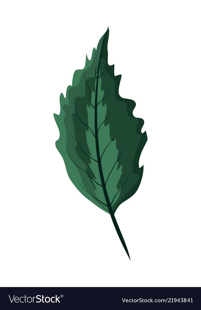 Nice exotic leaf rustic plant