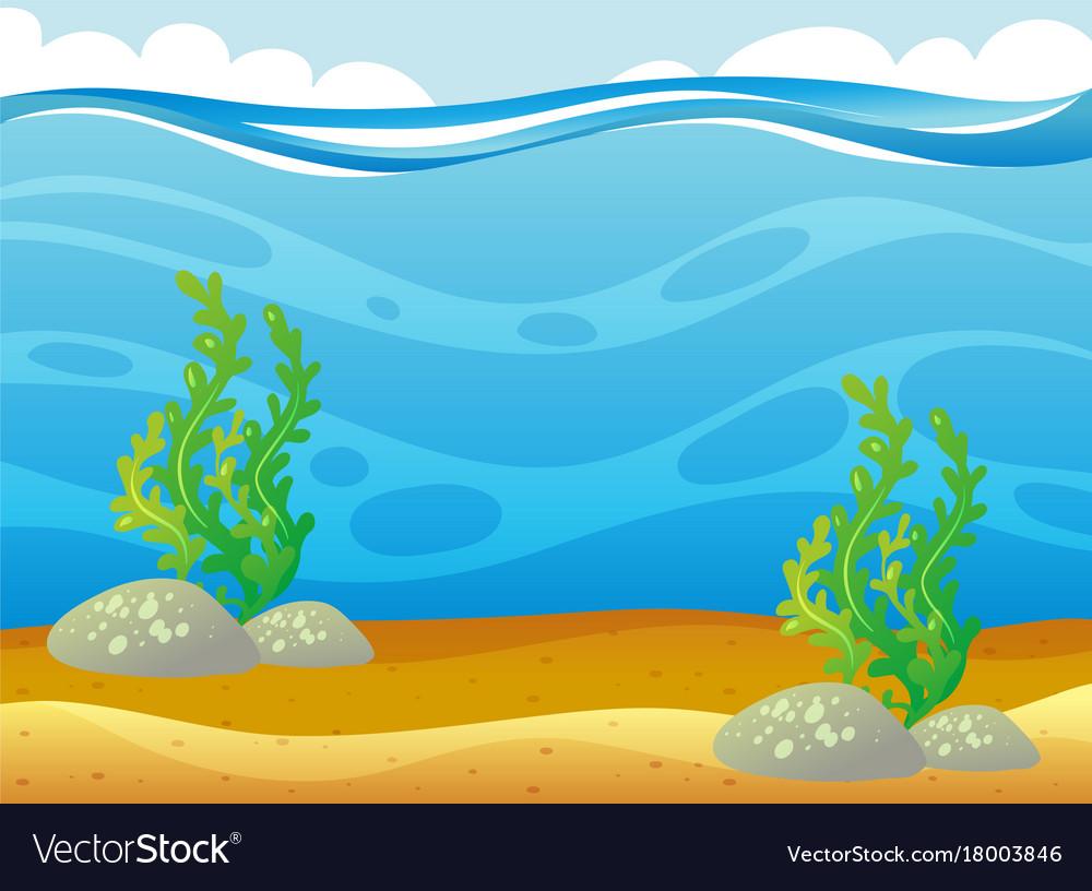 Ocean scene with seawe...