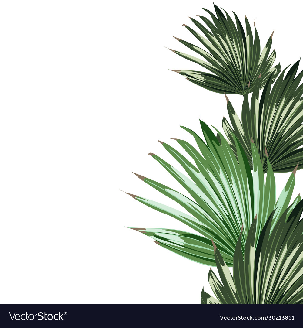 Realistic an palm leaves isolated