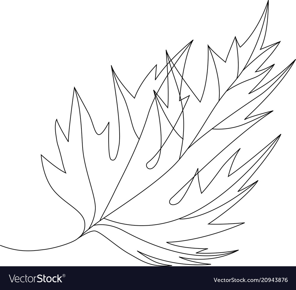 Autumn fallen maple leaf