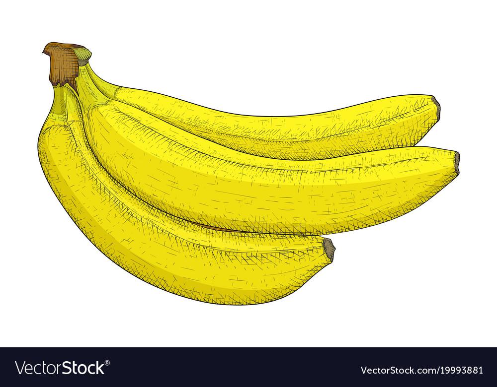 Banana hand drawn colored sketch